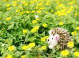 子年 草原のハリネズミ